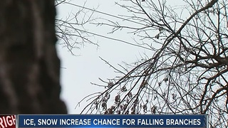 Ice, Snow Increase Chance For Falling Branches - Video
