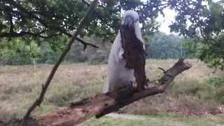 Harley the Cockatoo and Brother Gizmo Enjoy a Day in the Woods - Video