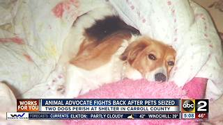 Animal advocate fights back after pets seized - Video
