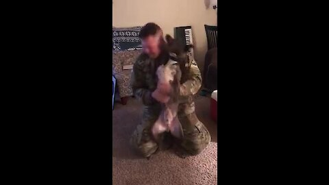 Dog Can't Hold Back Emotions After Owner Returns From Deployment