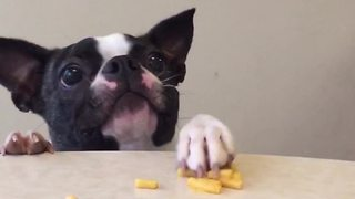 A Small Funny Dog Loves Mac And Cheese