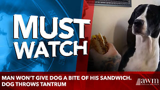 Man won't give dog a bite of his sandwich. Dog throws tantrum - Video