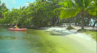 Kayaking in Biscayne Bay - Video