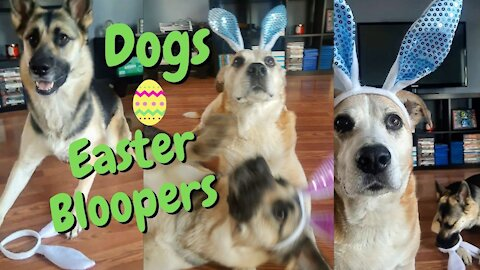 Dogs In Bunny Ears Easter Bloopers