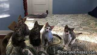 Kitties Line Up for Family Portrait - Video