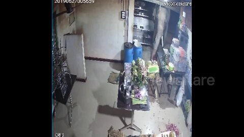 'Curious' elephant raids restaurant in southern India