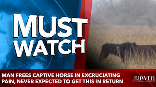 Man Frees Captive Horse In Excruciating Pain, Never Expected To Get This In Return - Video