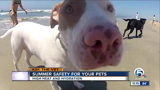 Summer safety advice for your pets - Video