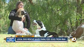 San Diego dog rescue saves paralyzed dogs from Iran - Video