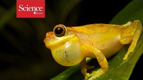 Can you tell how this frog is feeling just from his voice?