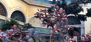 Bellagio decorates for Chinese New Year ahead of the holiday