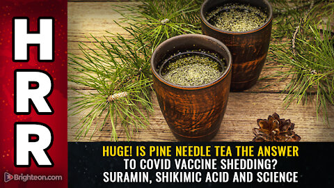 HUGE! Is pine needle tea the answer to covid vaccine shedding? Suramin, shikimic acid and science