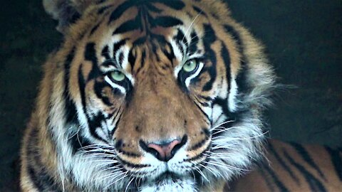A glimpse of the amazing animals of India
