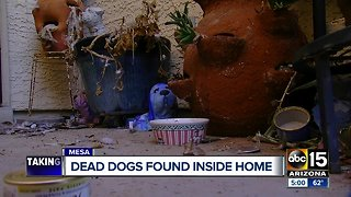 Dead dogs found inside home in Mesa
