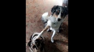 Watch dog's amazing reaction when owner asks, 'Who's your best friend?' - Video