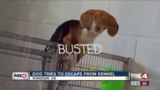 Dog caught on camera breaking out of cage - Video