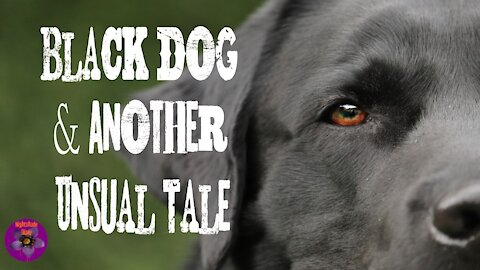 Black Dog and Another Unusual Tale | Nightshade Diary Podcast