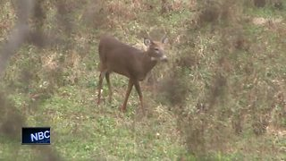 Assembly eliminates Wisconsin's minimum hunting age - Video