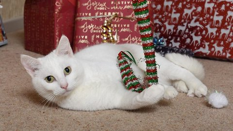 Cat-astrophic behaviour: 'Unadoptable' cat dubbed UK's unluckiest moggy after being left without home for bad behaviour gets second chance with brave new adoptees – and turns purrrfect for Christmas