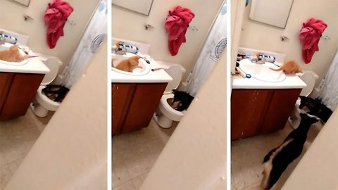 Hilarious Video Shows Cat And Dog Best Friends Playing In Bathroom