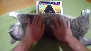 This Cat Makes the Perfect Video Game Dance Mat