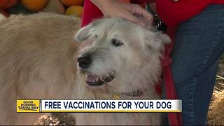 Humane Society of Tampa Bay offering free shots for dogs on Saturday - Video