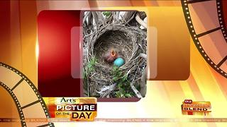 Art's Cameras Plus Picture of the Day for May 4! - Video