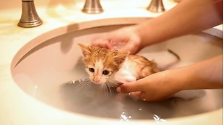 Kitten First Bath