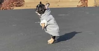 New sweater leaves dog jumping for joy