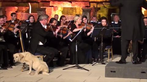 "Video: Dog crashes orchestra performance in ""the cutest moment in classical music"""