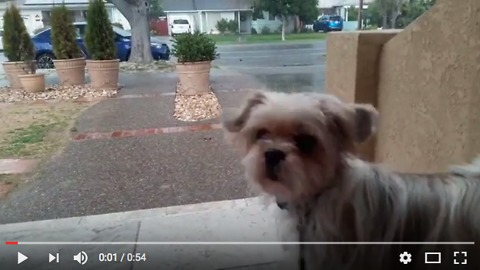 Puppy saw hail for the first time, reaction! 子犬が初めてひょうと遭遇!