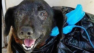 Dumped In A Trash Bag, Sweet Senior Dog Gets Second Chance  - Video