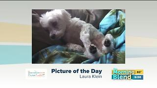 Monday Picture of the Day - Video