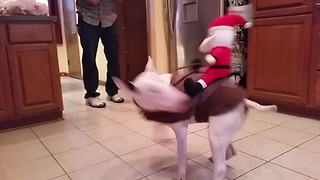 """Santa Claus Rides Bucking Bronco Dog"""