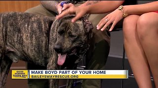 Rescues in Action: Boyd