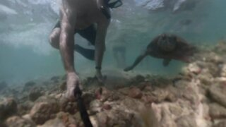 Green Sea Turtle Almost Hits Me!!!