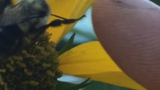 Did This Bee Just Give A High Five? - Video