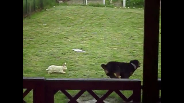 Dog Makes A Very Unusual Friend! - Video