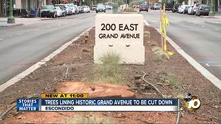 Trees lining Historic Grand Avenue to be cut down - Video