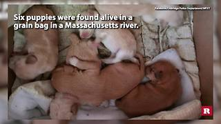 6 puppies found alive in river | Rare News - Video