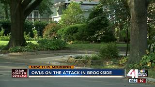Owls attack residents in Brookside neighborhood - Video