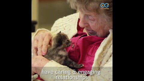 Break from Worry with Kittens Love Seniors - Your Daily Diversion