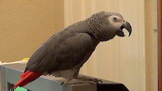 Curious parrot wants to know the color of coffee