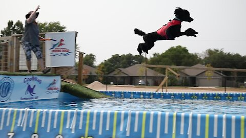 Coolwag Diving Dogs is officially open