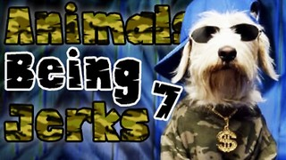 Animals Being Jerks #7 - Video