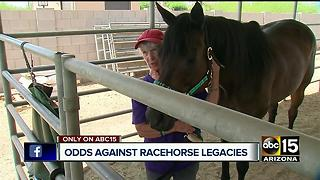 Arizona is home to retired race horses - Video
