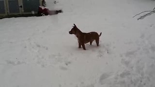 Puppy's first snow experience goes just like you'd imagine - Video