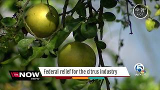 Federal Relief for the citrus industry - Video