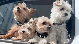 Warning about online puppy adoption scams - Video