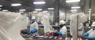 Safety measures for Tyson foods